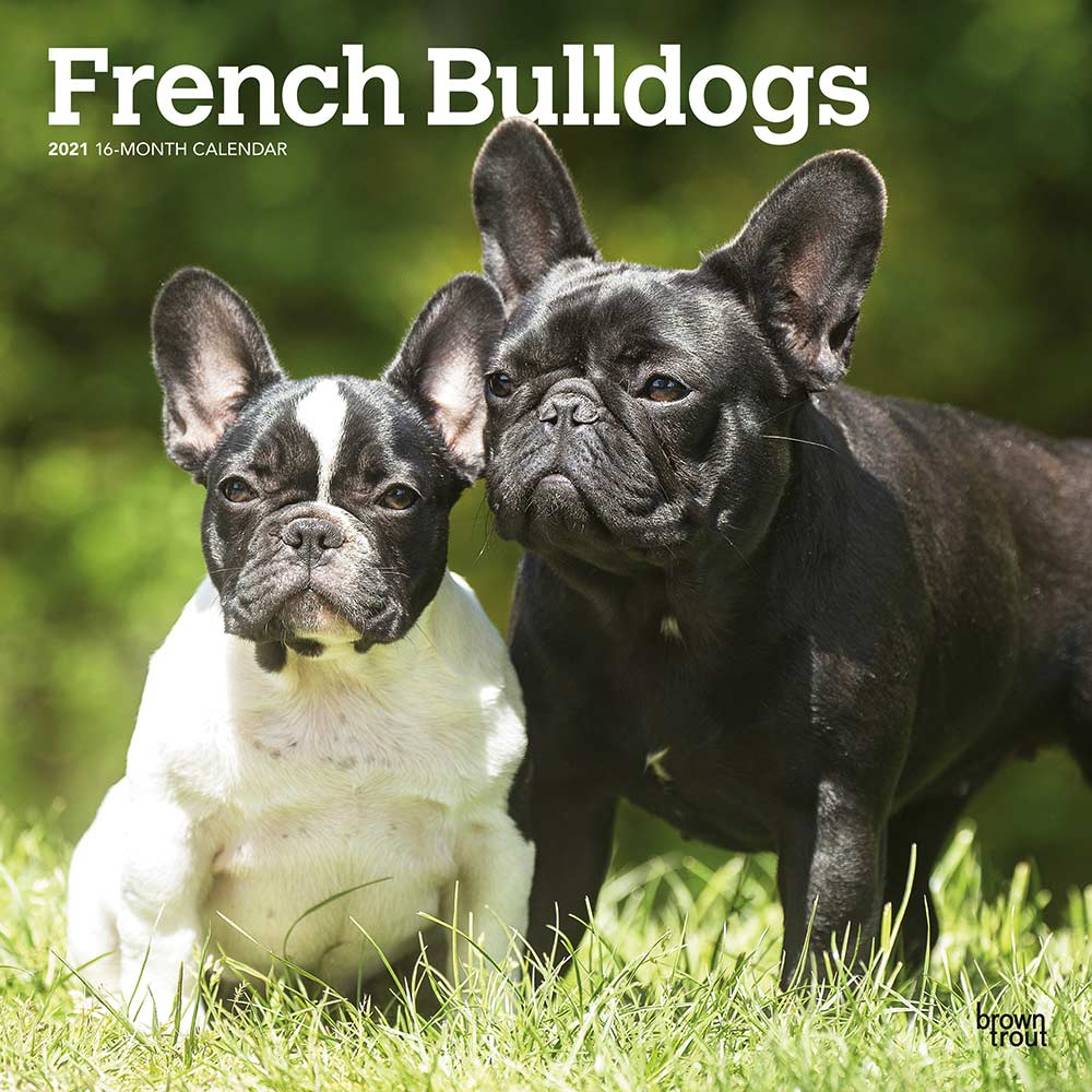 2021 French Bulldogs Calendar