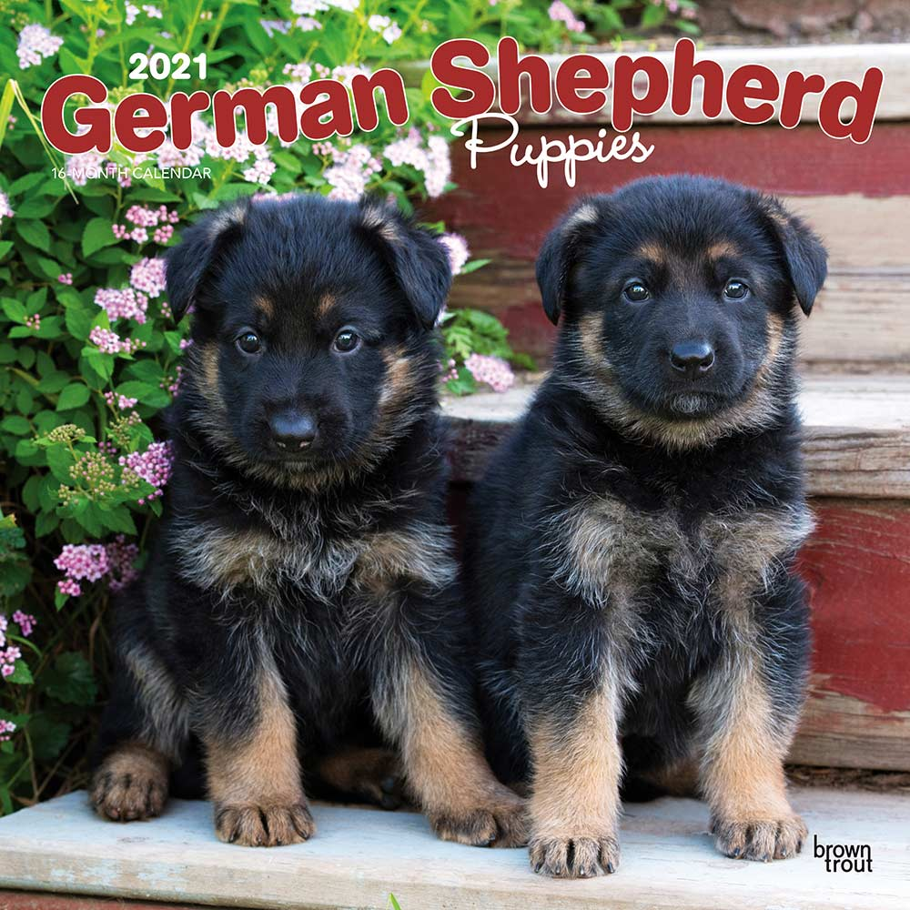 2021 German Shepherd Puppies Calendar
