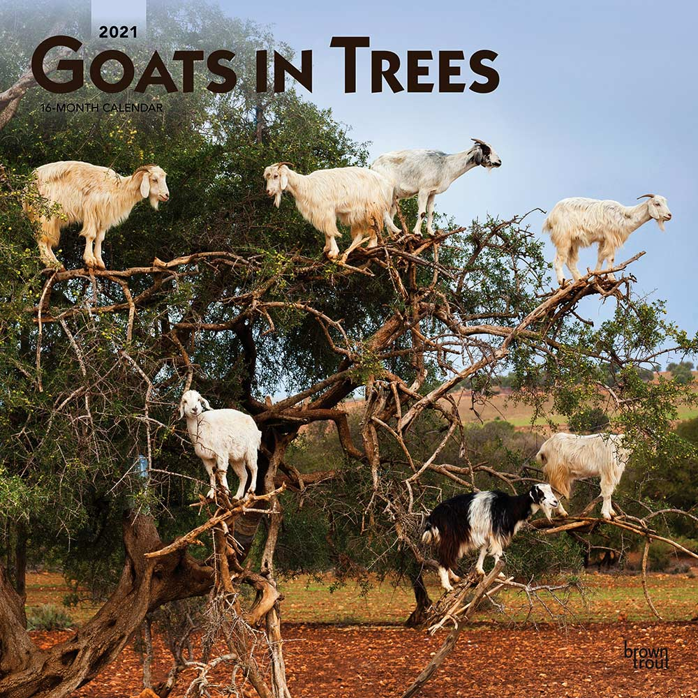 2021 Goats in Trees Calendar