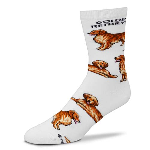 Golden Retriever Poses Socks