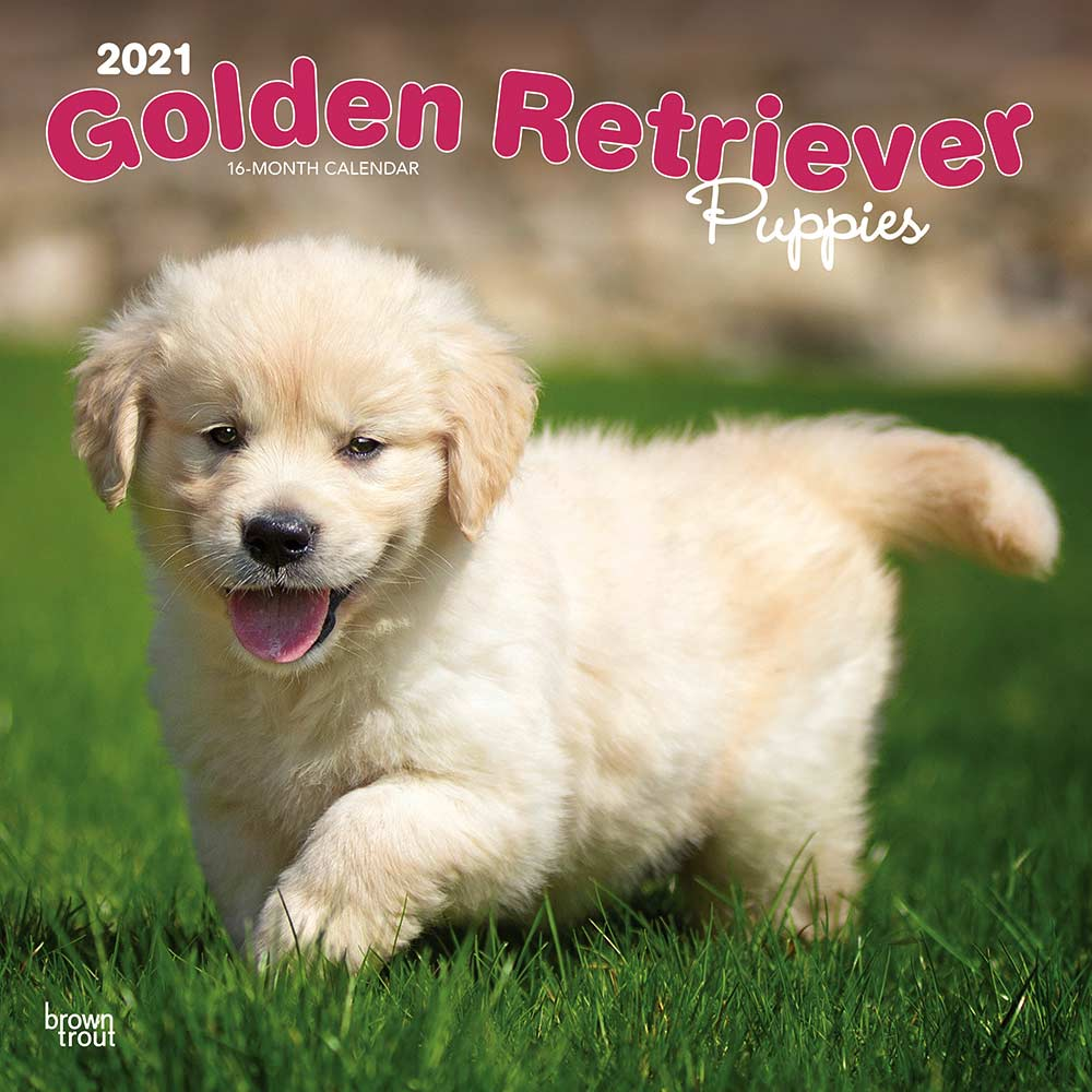 2021 Golden Retriever Puppies Calendar
