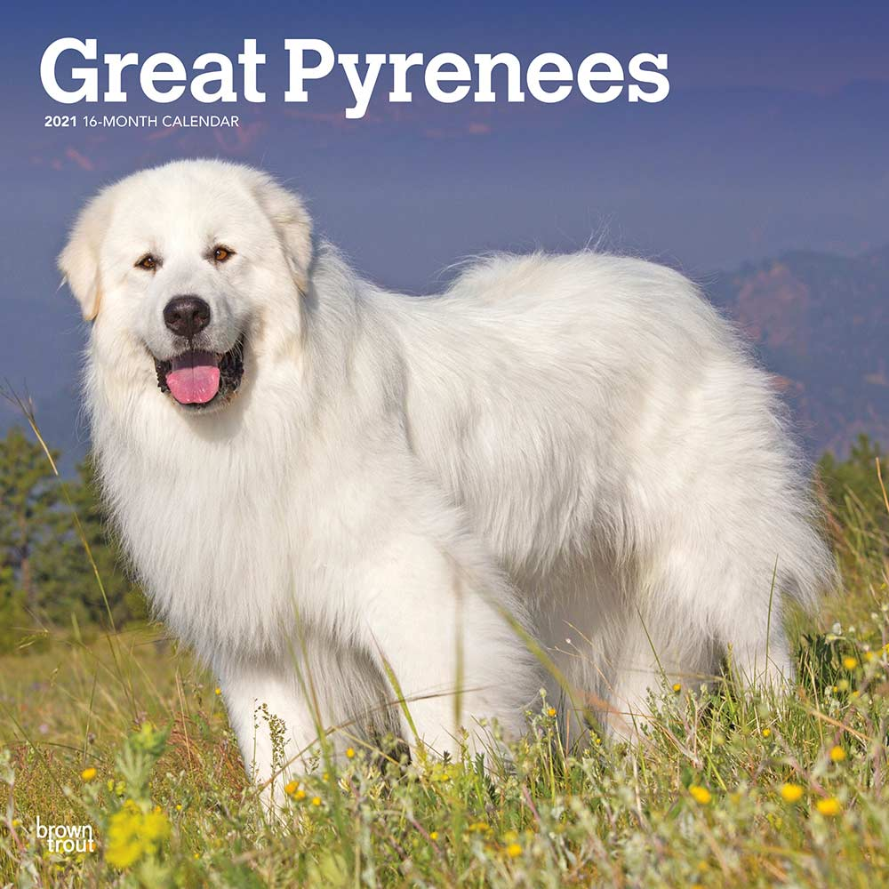 2021 Great Pyrenees Calendar