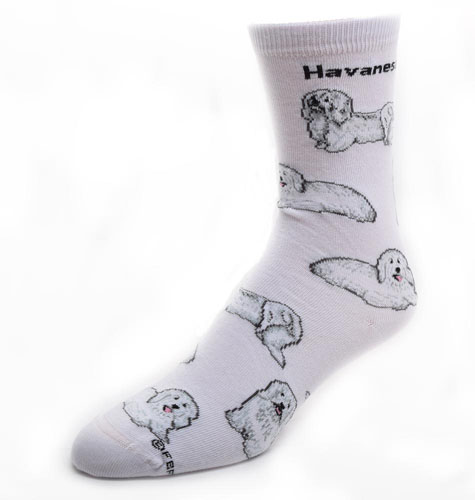 Havanese Socks Poses 2