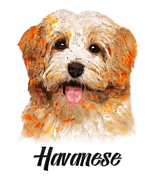 Havanese T-Shirt - Vivid Colors