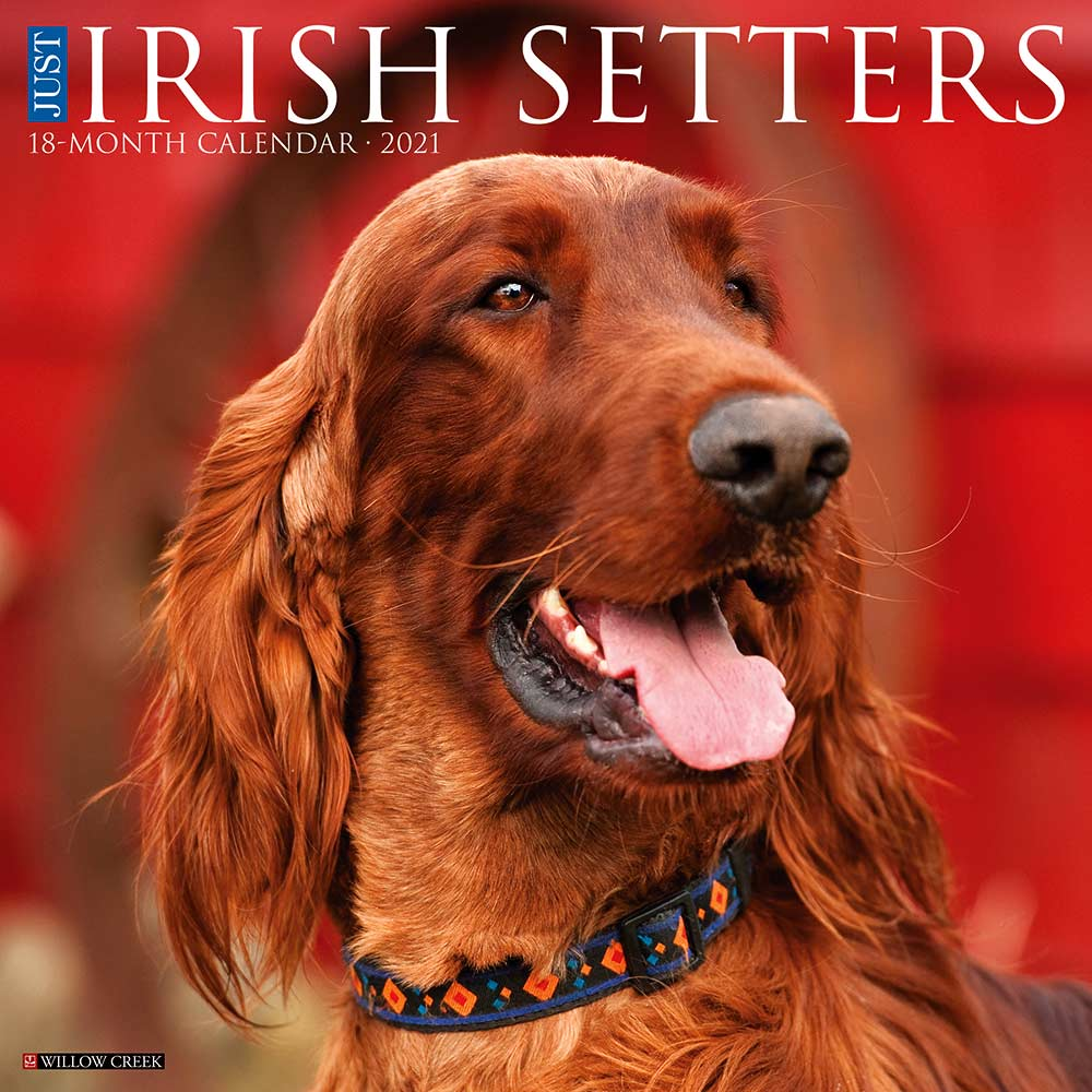 Irish Setter Willow Creek Calendar