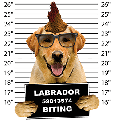 Labrador Retriever Yellow T-Shirt - Mug Shot