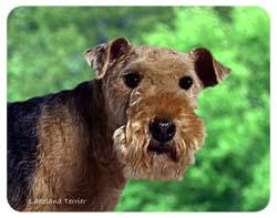 Lakeland Terrier Coasters
