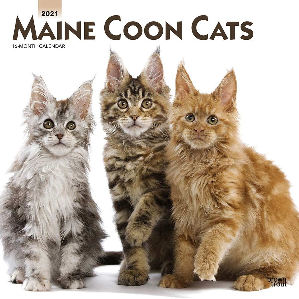 2021 Maine Coon Cats Calendar
