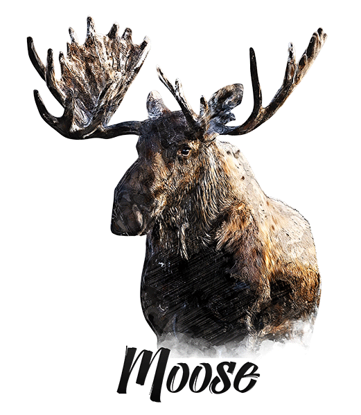 Moose T-Shirt - Vivid Colors