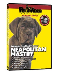 Neapolitan Mastiff Video