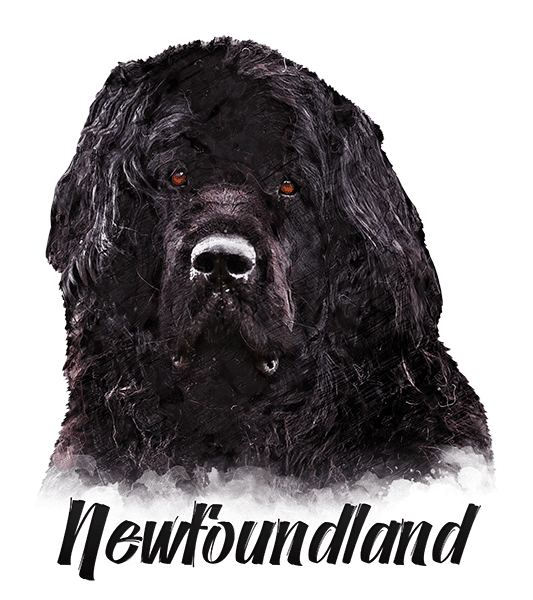 Newfoundland T-Shirt - Vivid Colors