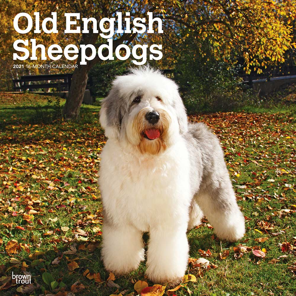 2021 Old English Sheepdogs Calendar