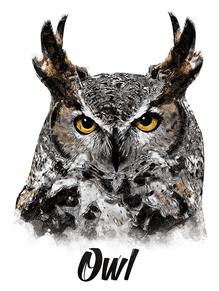 Owl T-Shirt - Vivid Colors