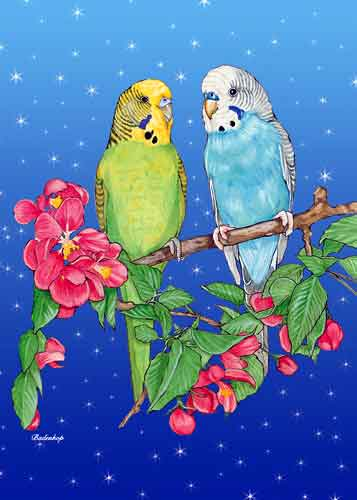 Parakeet Christmas Cards