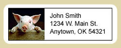 Pig Address Labels