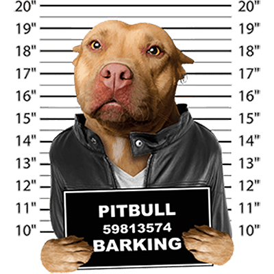 Pit Bull Terrier T-Shirt - Mug Shot