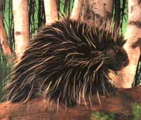 Porcupine Puppet by Folkmanis
