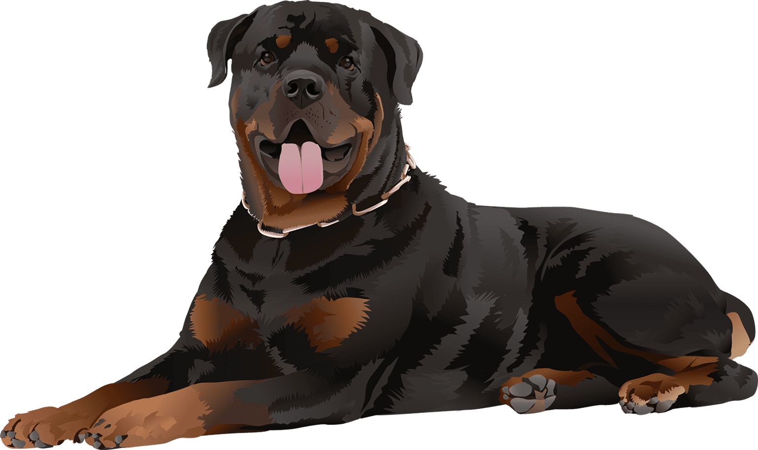 Rottweiler T-Shirt Laying Down - Vibrant Vector