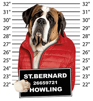 Saint Bernard T-Shirt - Mug Shot