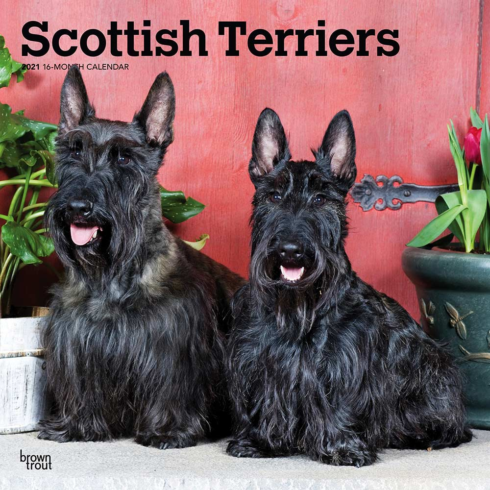 2021 Scottish Terriers Calendar