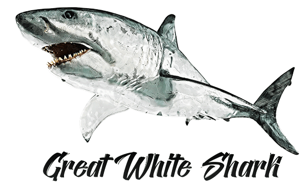 Shark Great White T-Shirt - Vivid Colors