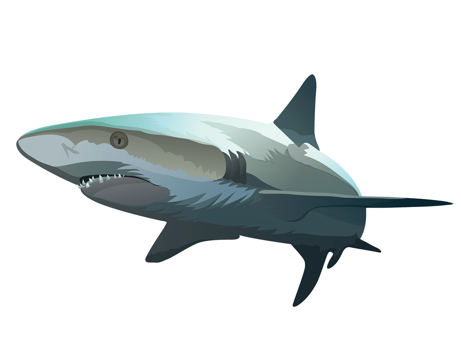 Shark T-Shirt - Vibrant Vector