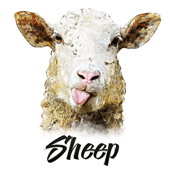 Sheep T-Shirt - Vivid Colors