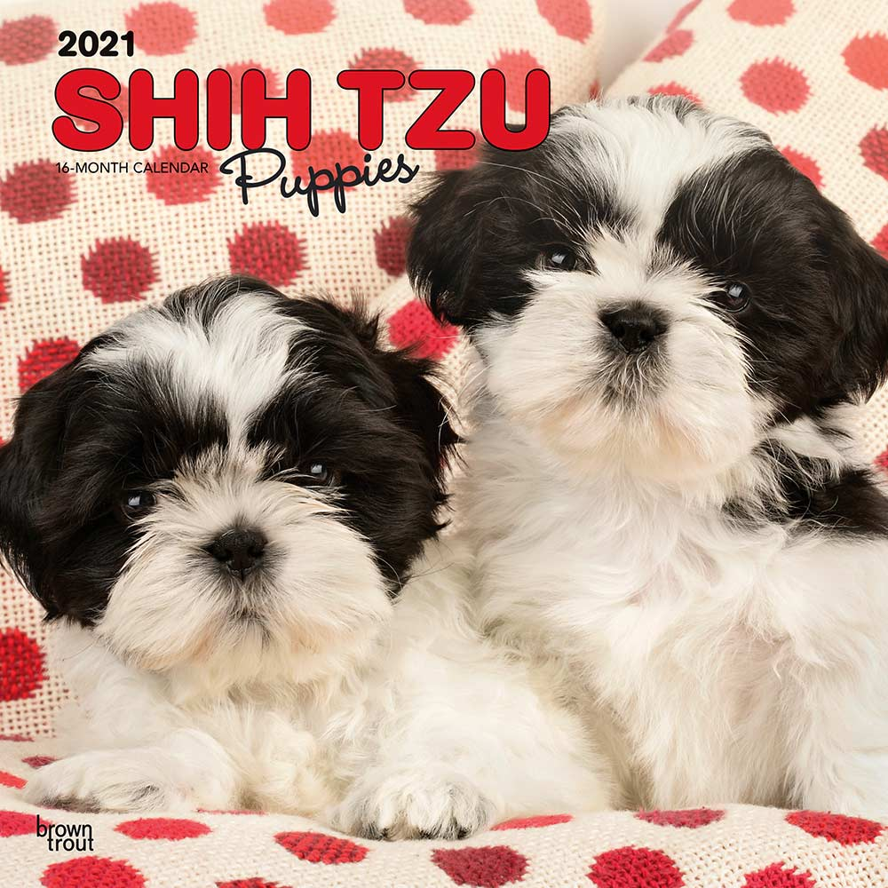 2021 Shih Tzu Puppies Calendar