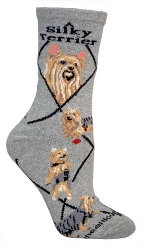 Silky Terrier Socks