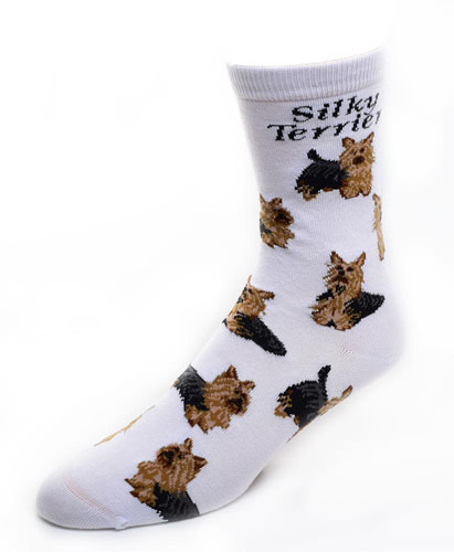 Silky Terrier Socks Poses 2