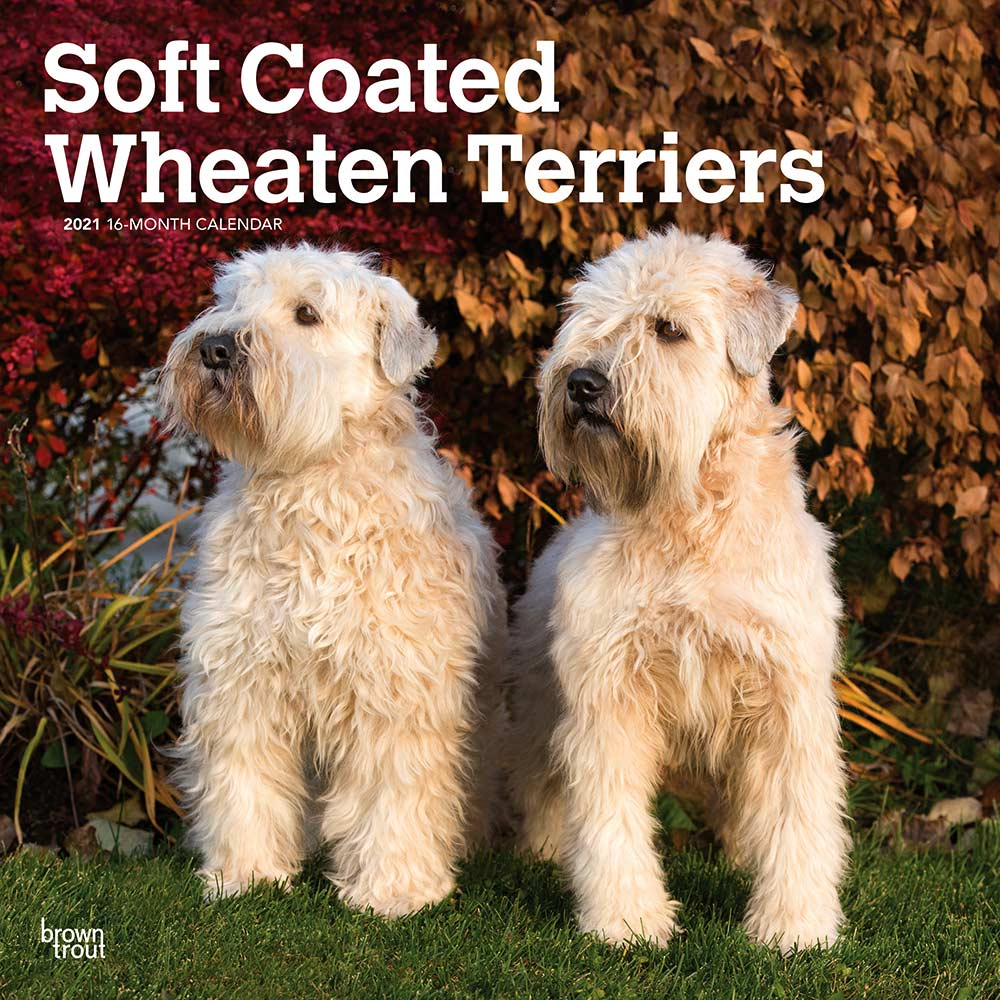 2021 Soft Coated Wheaten Terriers Calendar