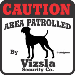 Vizsla Bumper Sticker Caution