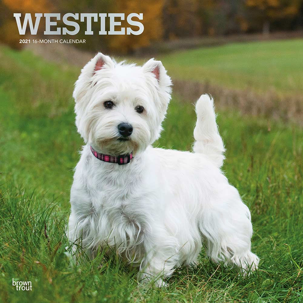 2021 West Highland White Terriers Calendar