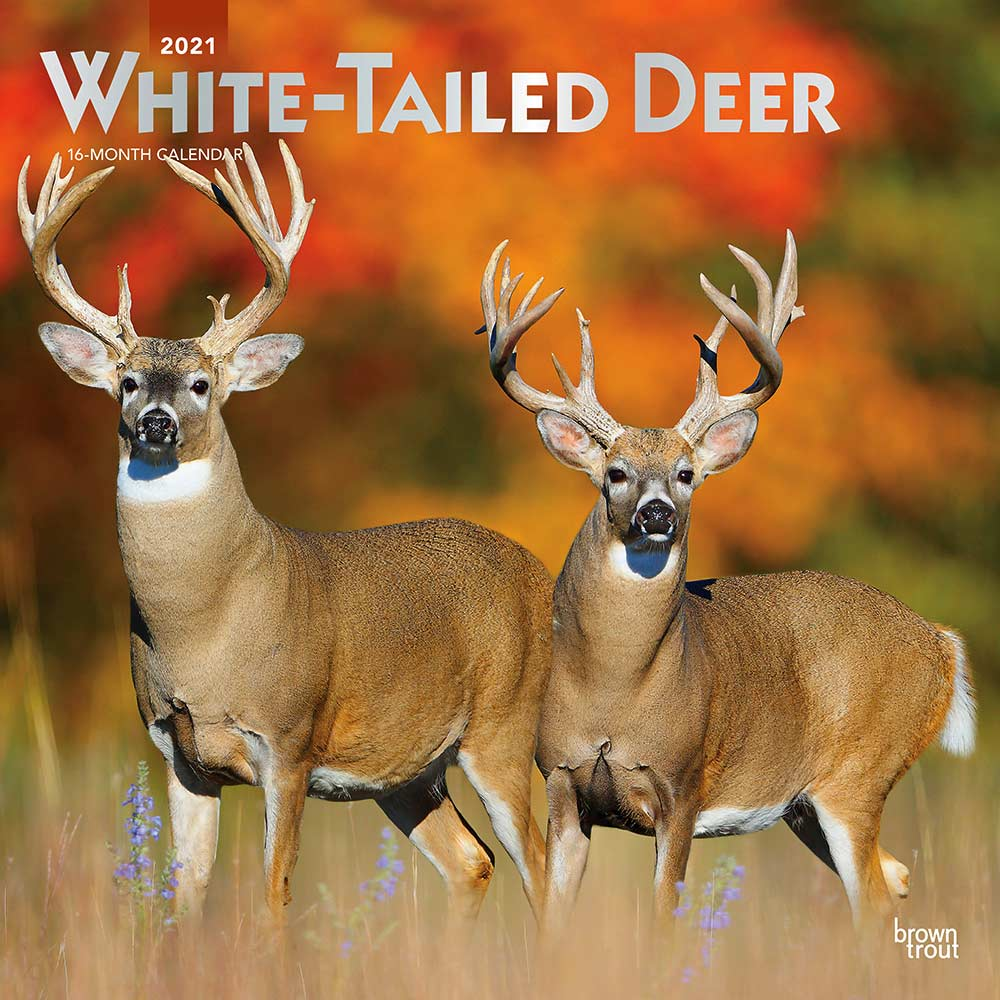 2021 White-tailed Deer Calendar