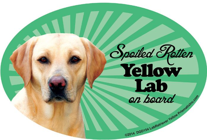 Yellow Lab Car Magnet - Spoiled Rotten