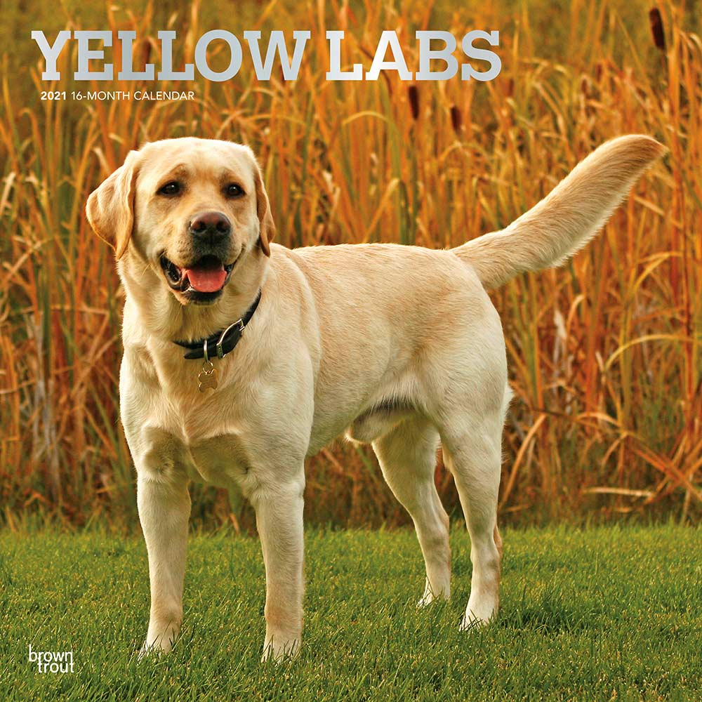 2021 Yellow Labrador Retrievers Calendar