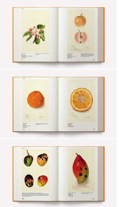 A book like no other. We are thrilled to announce 'An Illustrated Catalog of American Fruits & Nuts'