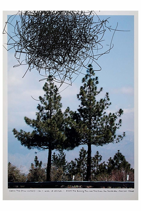 ARTBOOK @ Paper Chase Presents Pat Pickett: Tree Drawings