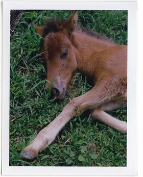 Featured image is reproduced from <I>Charlotte Dumas: Work Horse</I>.