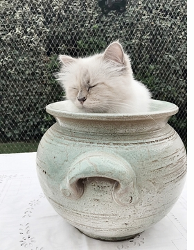 Featured image is reproduced from 'Karl Lagerfeld: Choupette by Karl Lagerfeld.'