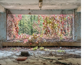 Featured image is reproduced from 'David McMillan: Growth and Decay.'