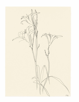 Featured image is reproduced from 'Ellsworth Kelly: Plant Drawings.'