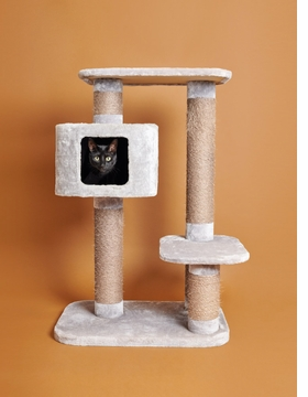 Featured image is reproduced from 'For Cats Only'.