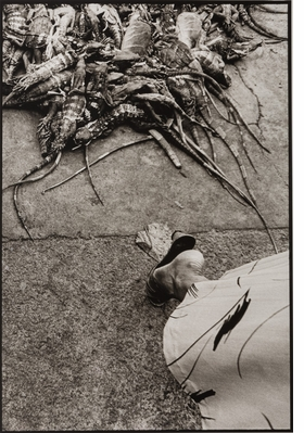 """Iguanas,"" Juchitán,1984, is reproduced from 'Graciela Iturbide's Mexico.'"