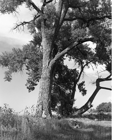 In <I>Cottonwoods</I>, Robert Adams asks, 'If it is not too late, will we do better before it is too late?'