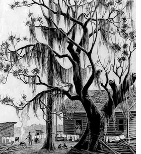 """Featured image, """"Under the Chinaberry Tree,"""" a 1947 wood engraving by Grace Albee, is reproduced from <I>In the Eye of the Muses</I>."""