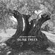 Jacques Berthet: Olive Trees