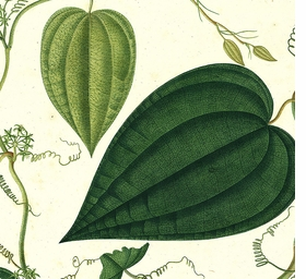 Featured image is reproduced from 'José Celestino Mutis: A Botanical Expedition.'