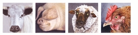 """Featured animal portraits are reproduced from <a href=""""9783775726542.html"""">Karin Kneffel 1990-2010</a>."""