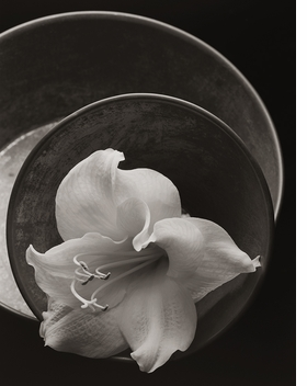 Featured image is reproduced from 'Kenro Izu: Seduction.'